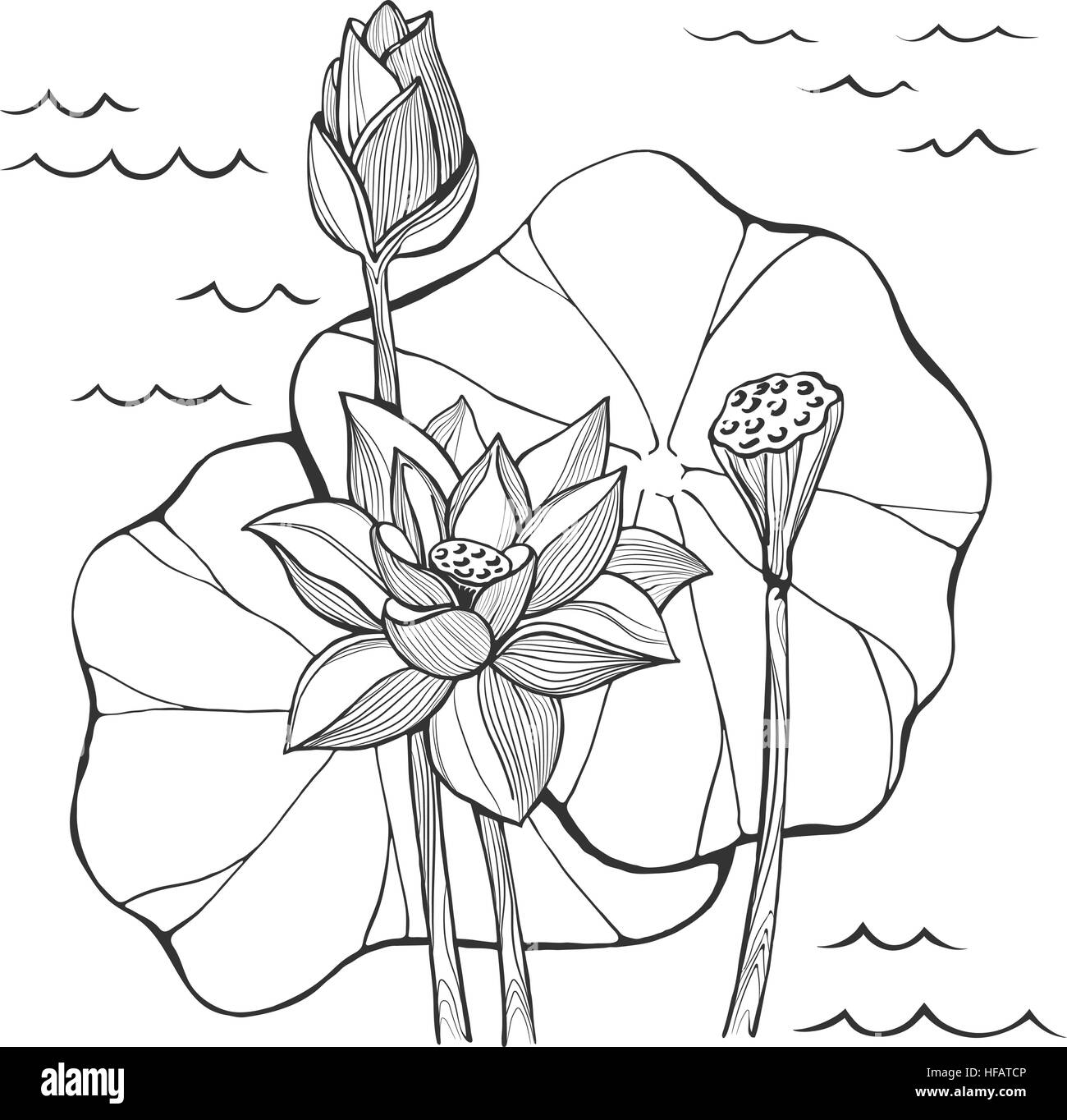 Vector sketch lotus flowers bud and seeds stock vector art vector sketch lotus flowers bud and seeds mightylinksfo