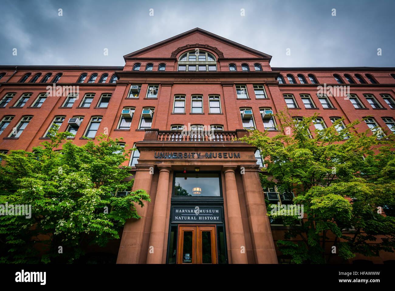 The Harvard Museum of Natural History, in Cambridge, Massachusetts. Stock Photo
