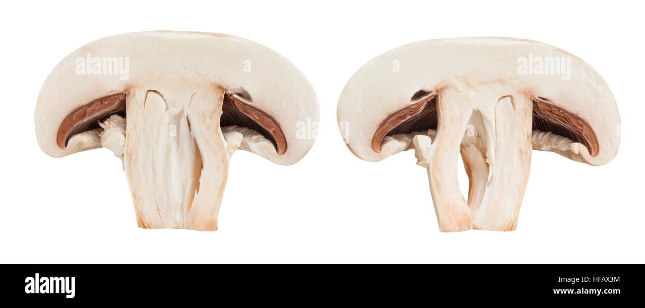 sliced mushroom isolated - Stock Image