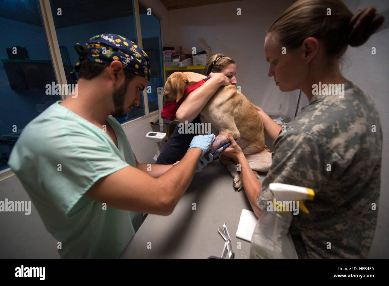 150715-N-XQ474-125 BUENAVENTURA, Colombia (July 15, 2015) -A local veterinarian, left, works with a volunteer with - Stock Image
