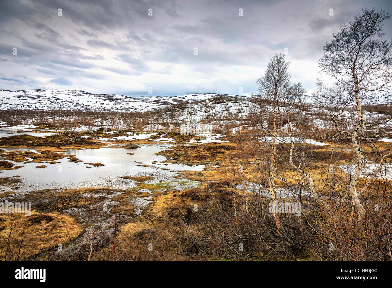 Thawing snow revealing the plants and landscape at Jotunheimen National Park, Norway - Stock Image