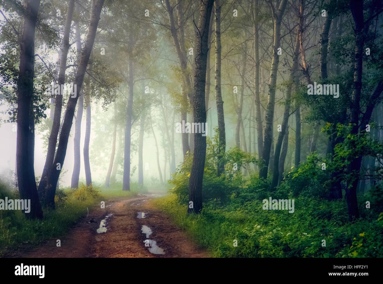 Mystical forest - Stock Image