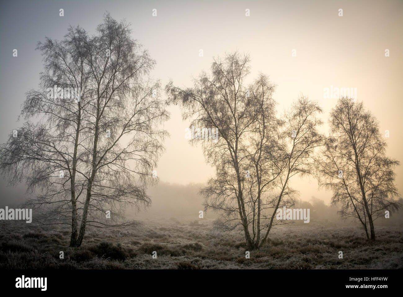 Winter landscape scene of heathland and trees in freezing fog. Frensham Common in the Surrey Hills Area of Outstanding - Stock Image