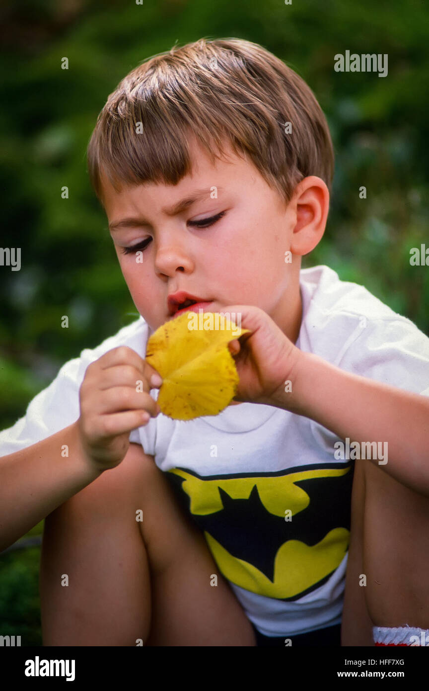 A four-year old boy is absorbed in concentration over a yellow leaf . - Stock Image