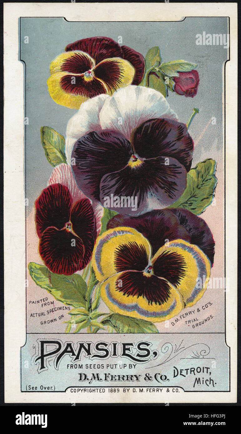 Agriculture Trade Cards - Asters, from seeds put up by D. M. Ferry & Co., Detroit, Mich - Stock Image