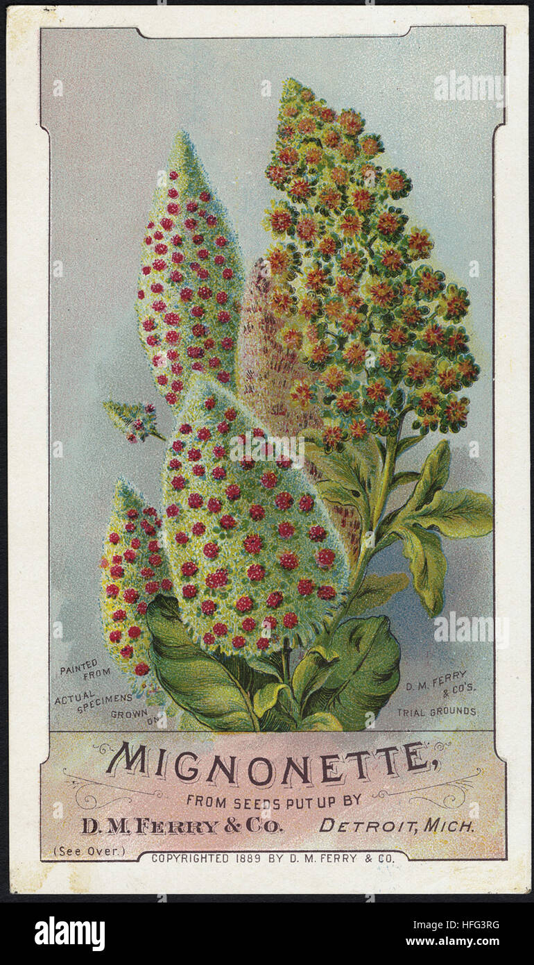 Agriculture Trade Cards - Mignonette, from seeds put up by D. M. Ferry & Co., Detroit, Mich - Stock Image