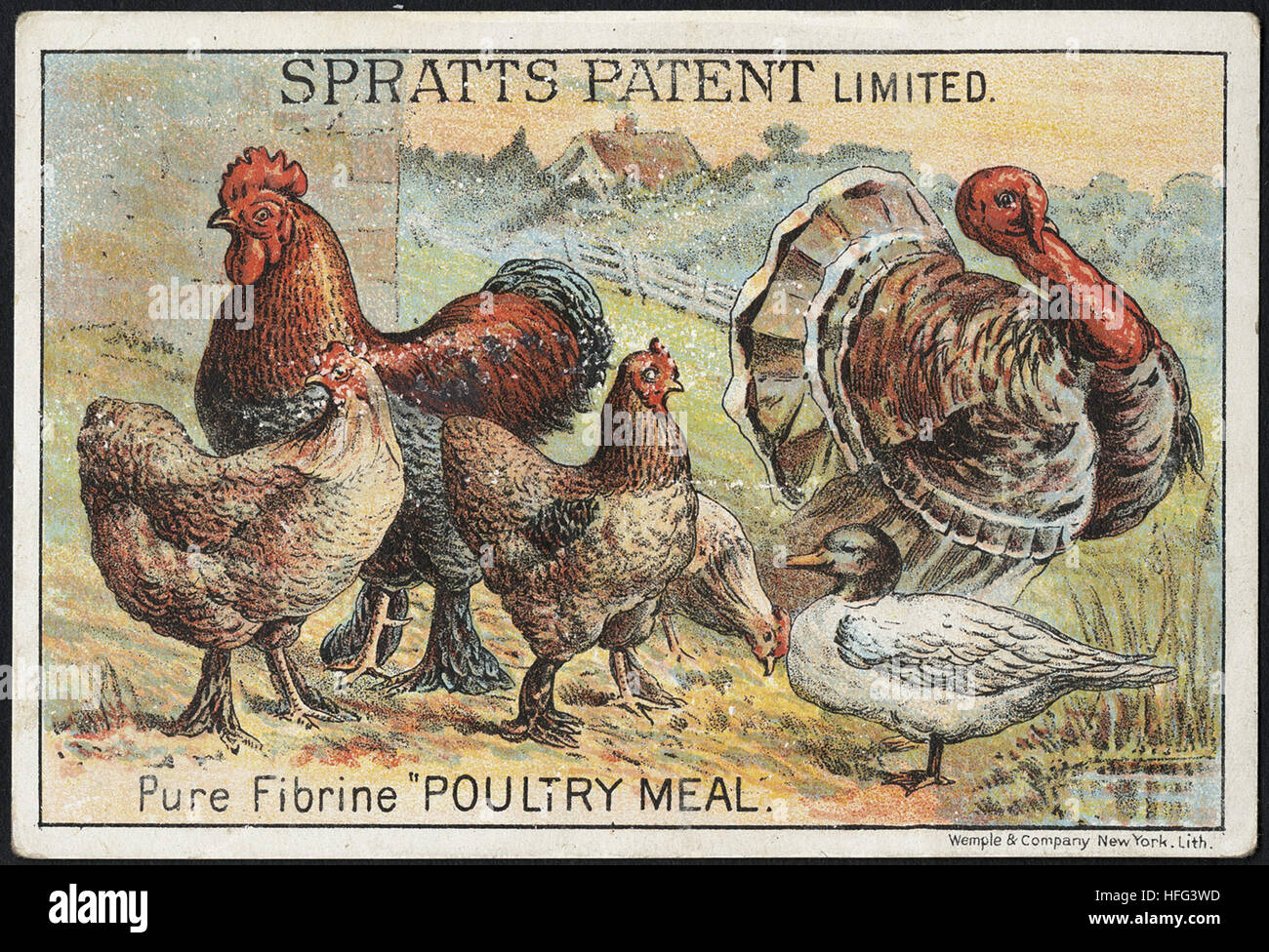 Agriculture Trade Cards - Spratt's Patent Limited. Pure Fibrine 'Poultry Meal.' - Stock Image
