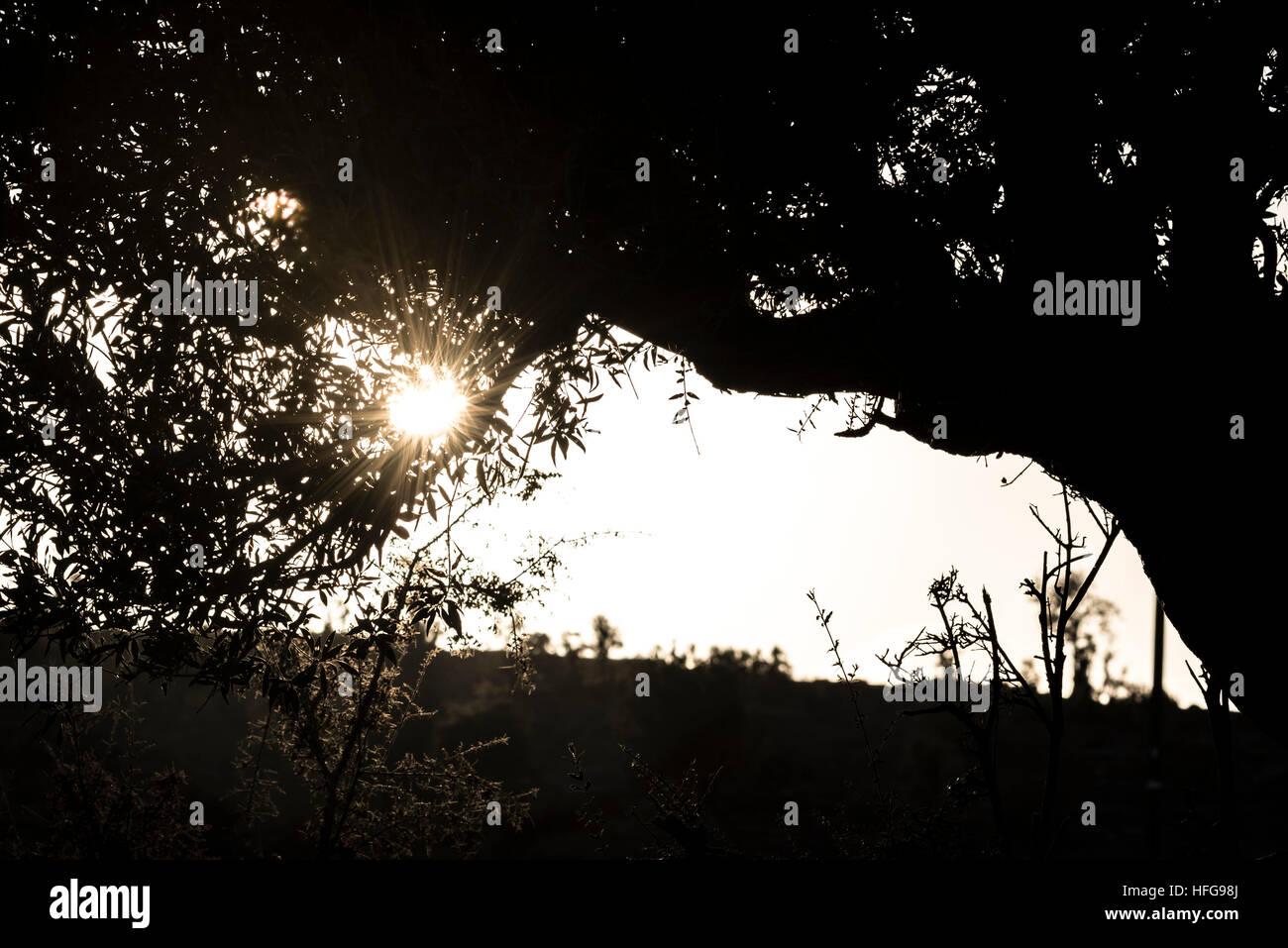 Sunstar through the bushes. Shot from Jabal Shams, Sultanate of Oman - Stock Image