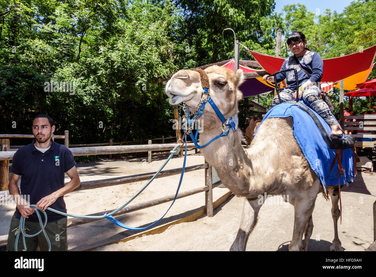 New York New York City Nyc Bronx Bronx Zoo Camel Animal Ride Riding