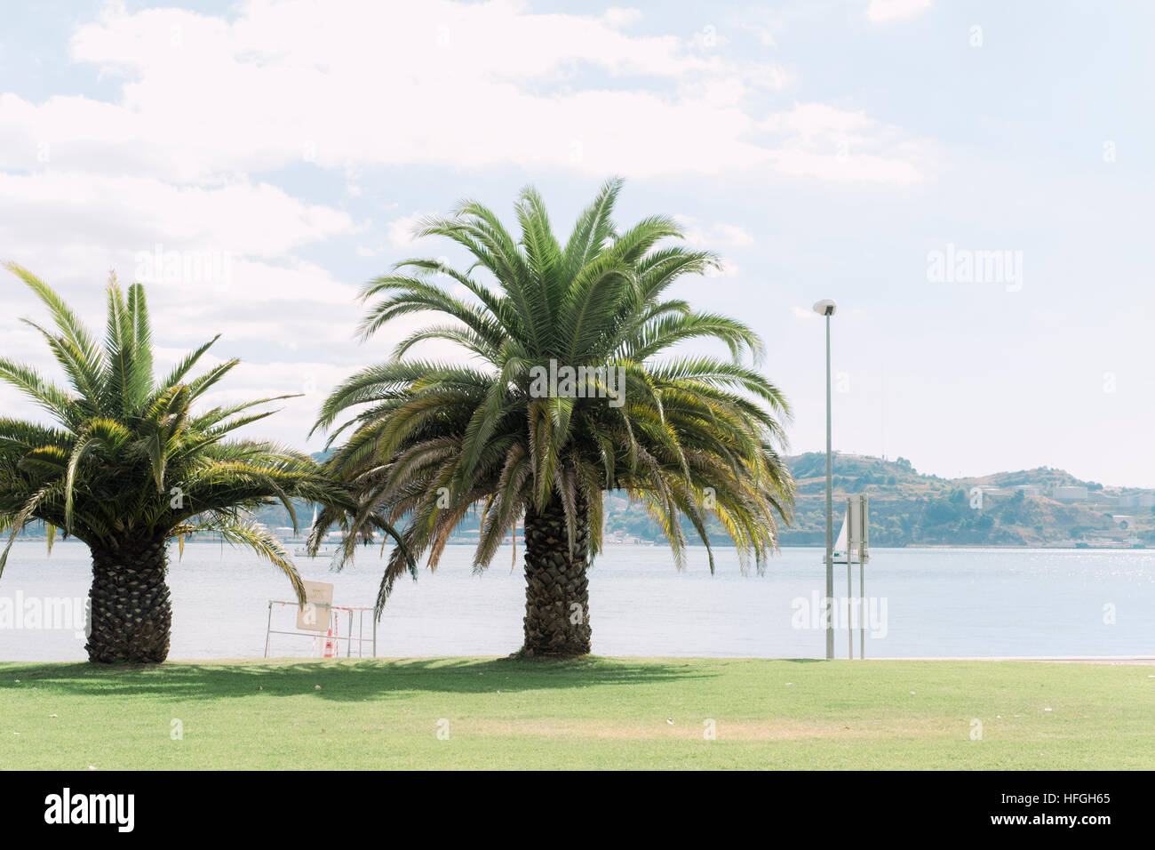 Palm trees near the Tage River - Stock Image