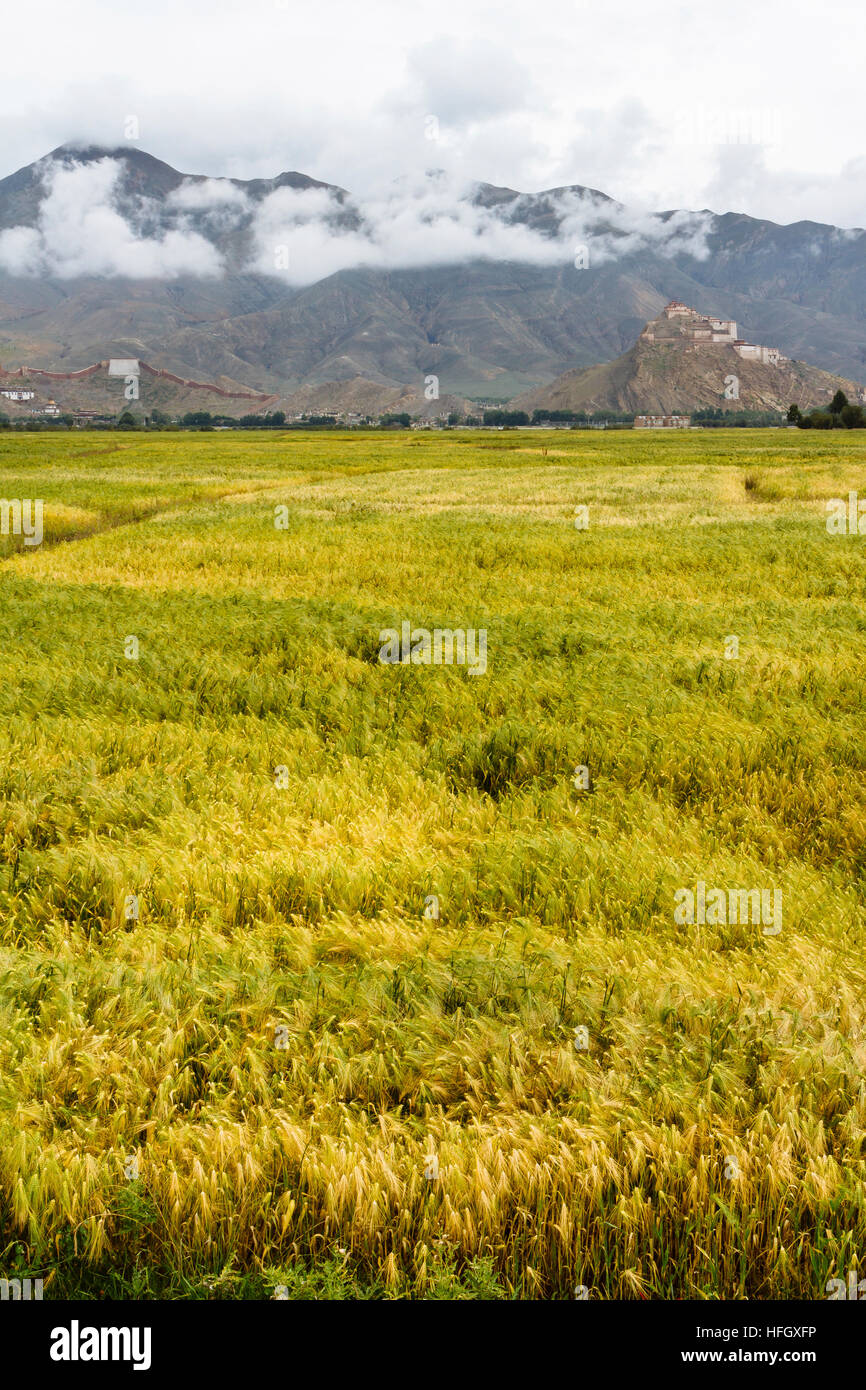 The view of the beautiful field with the Great Gyantse Castle in the distance. - Stock Image