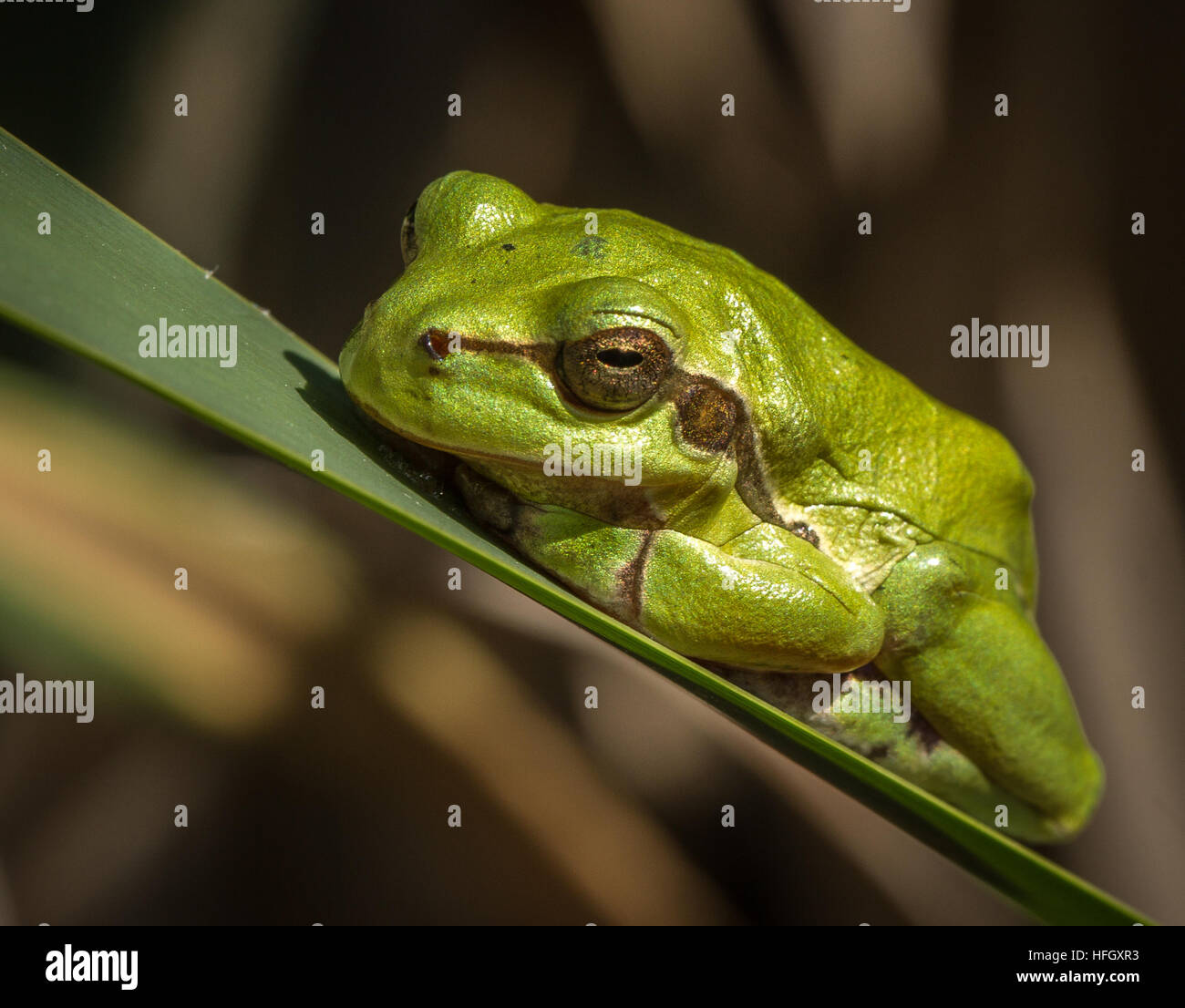 Thoughtful Frog Stock Photos & Thoughtful Frog Stock Images - Alamy