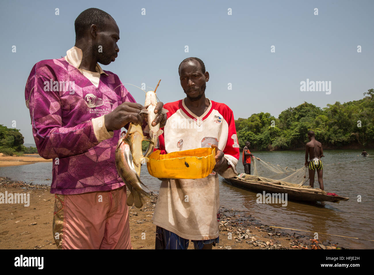 Baro village, Guinea, 1st May 2015: Fishermen catch fish in their net. This time is normally good for fishing because Stock Photo