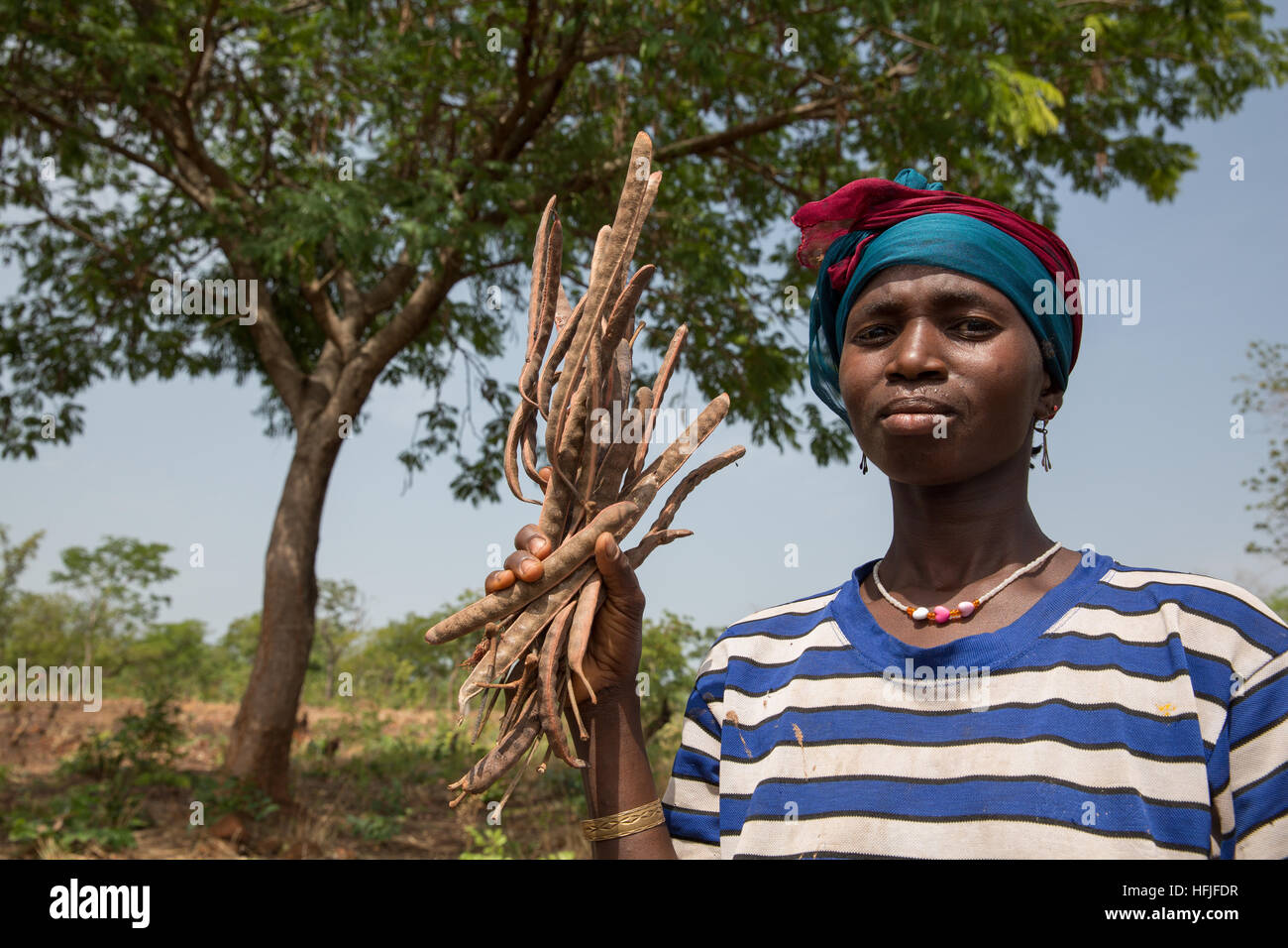 Koumban village, Guinea, 2nd May 2015. Mariama Condé, 35 with 4 children, is cutting néré fruit with - Stock Image
