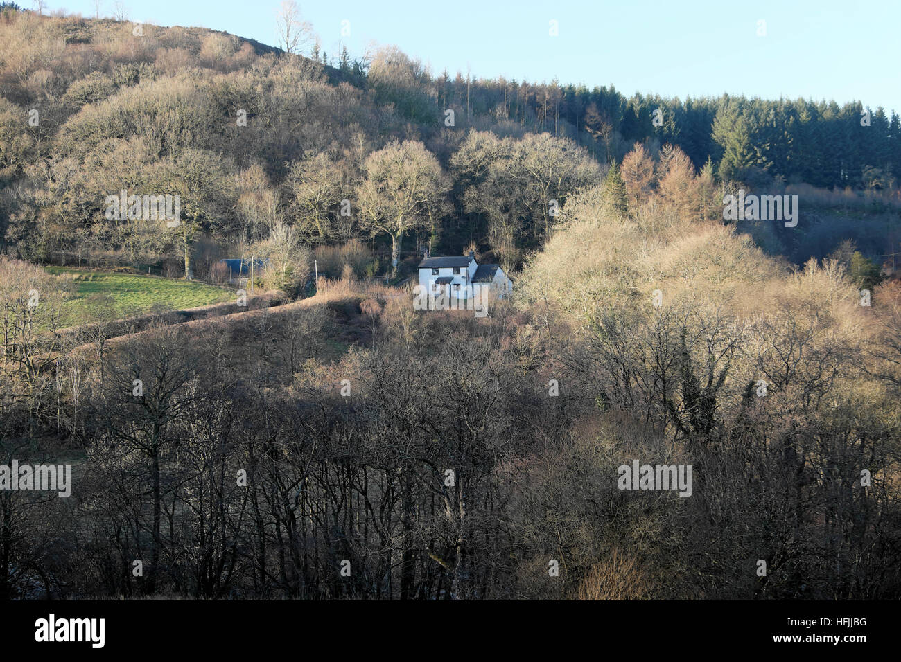 A cottage house surrounded by trees in winter  branches in rural countryside Carmarthenshire Wales UK  KATHY DEWITT - Stock Image