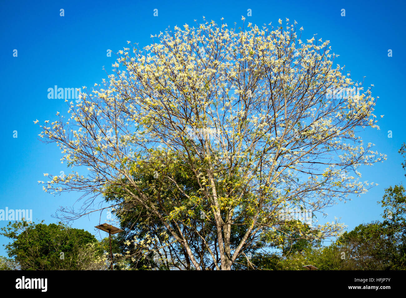 Pink flowered tree stock photos pink flowered tree stock images pink flowered tree stock image mightylinksfo