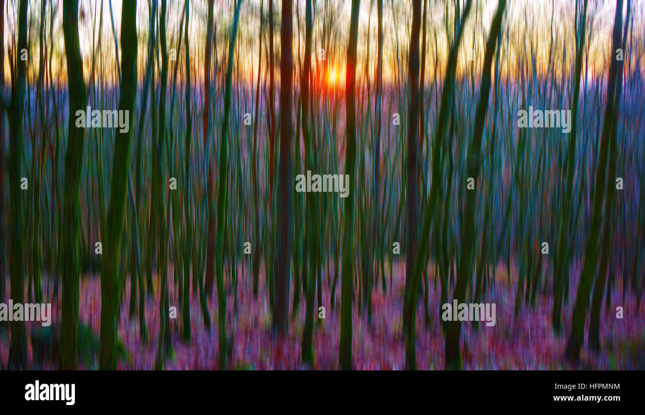 visualization or impression of colours of sunset at young forest - Stock Image