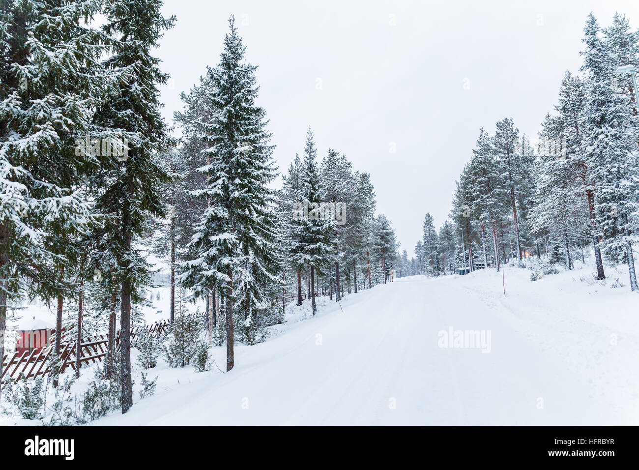 Steady snowfall overnight and -5 Centigrade temperatures contributed to a beautiful white Christmas, today 25th Stock Photo