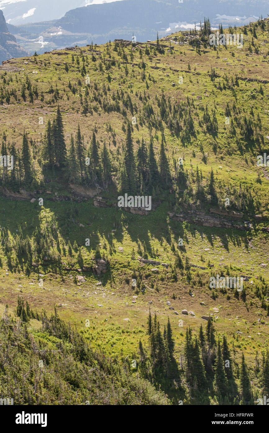 High-elevation forest and meadow in Glacier National Park, Montana, USA. - Stock Image