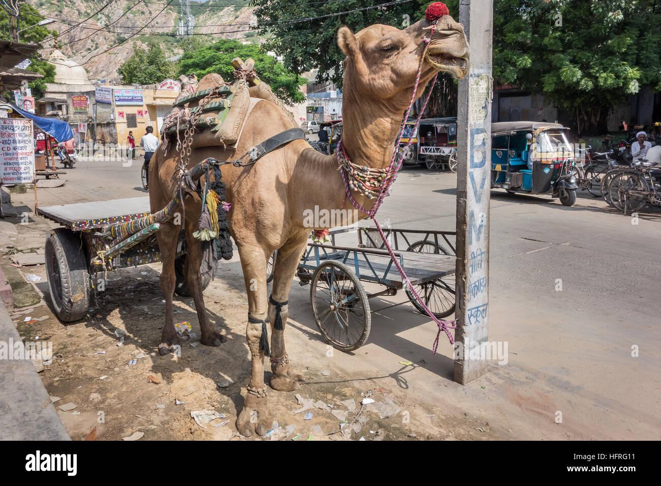 Camel toeing photos