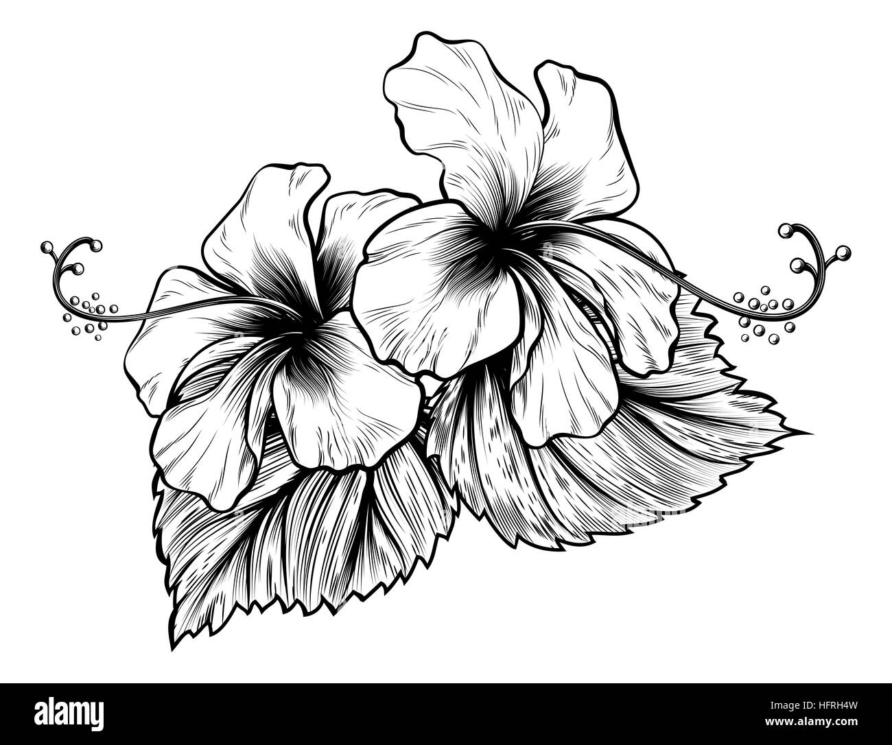 Hawaiian hibiscus black and white stock photos images alamy hibiscus flowers in a vintage woodcut engraved etching style stock image izmirmasajfo