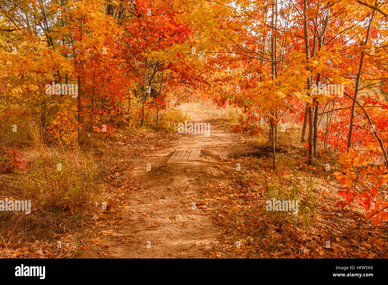Autumn scene. Fall scene. Beautiful Autumnal park. Beauty nature Stock  Photo - Alamy