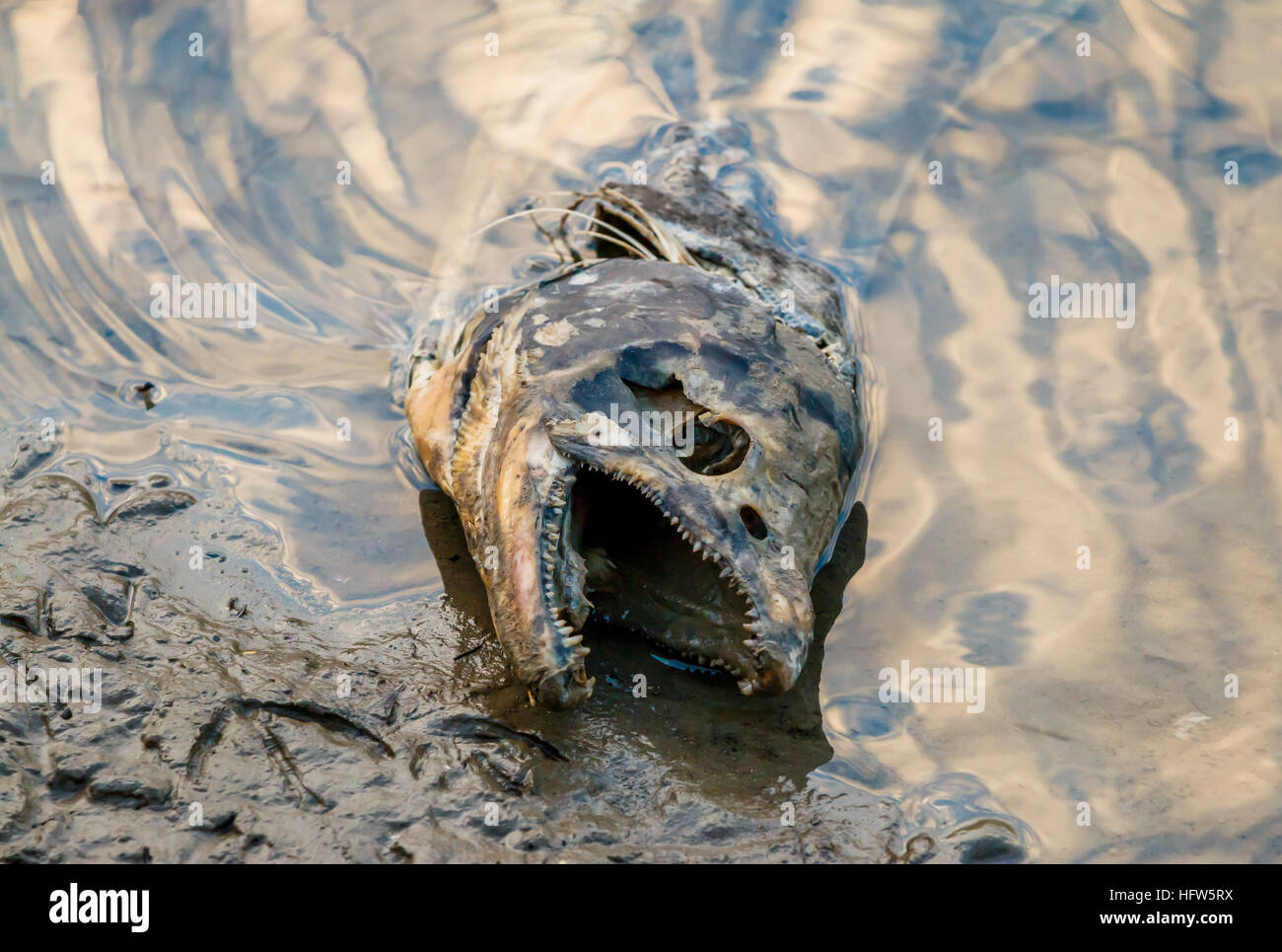 Image result for dead rotting fish