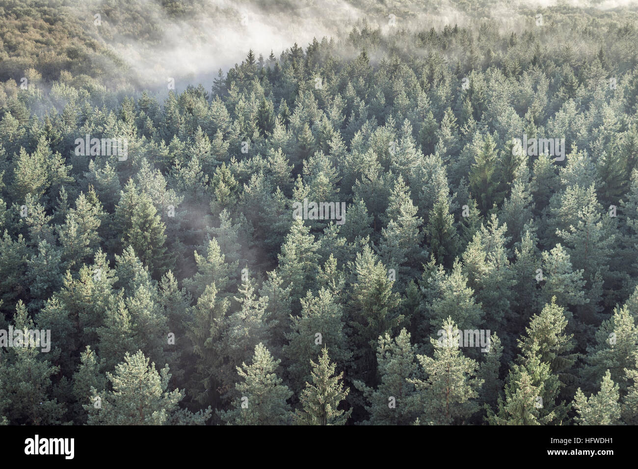 Panoramic view of misty coniferous wood forest in retro, vintage style. Foggy landscape with green spruces. - Stock Image