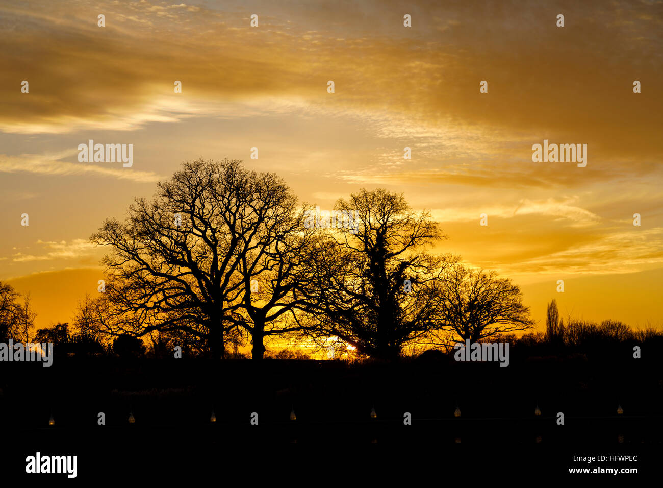 Sunset behind silhouetted leafless trees in winter at the Christmas Glow event at RHS Wisley, Surrey, UK - Stock Image