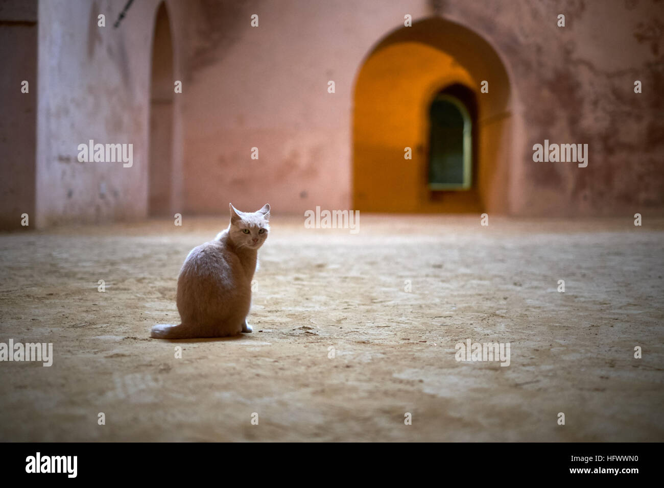 a sand colored cat sitting inside the grain store in the imperial