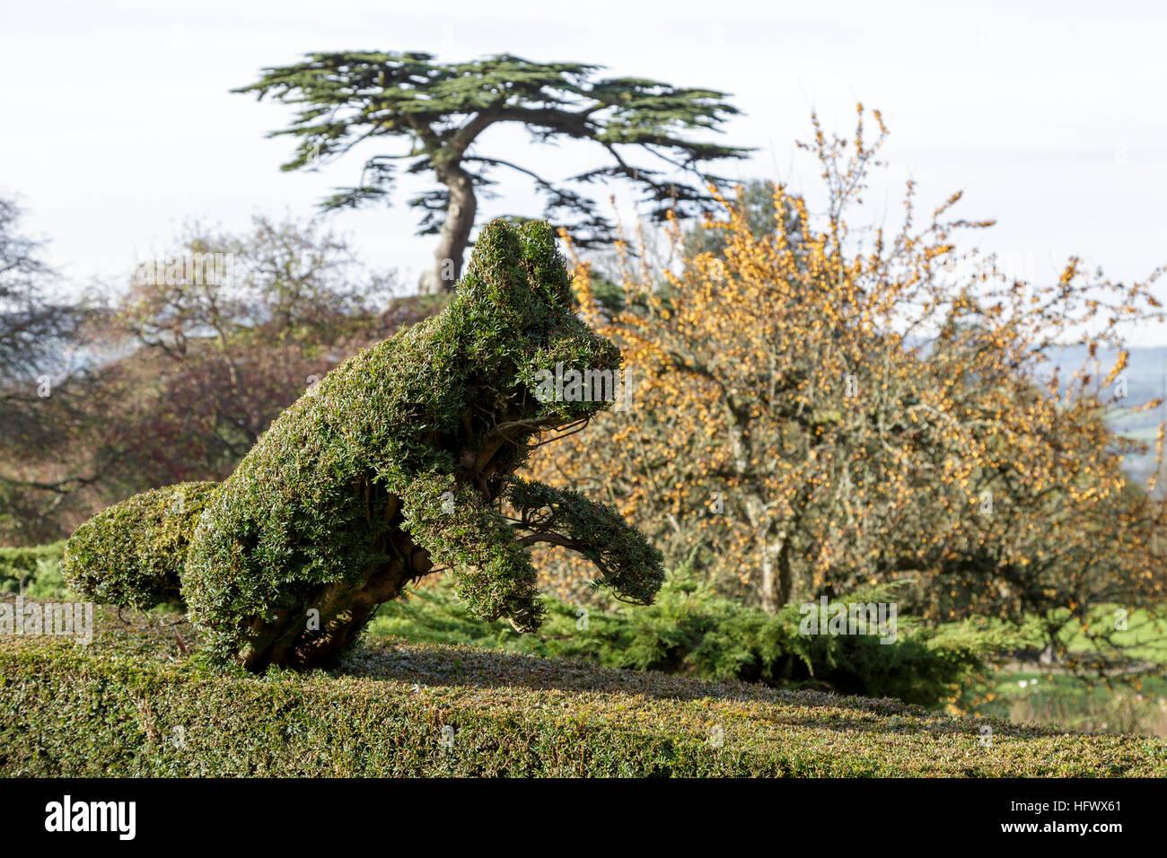 Running fox topiary in Yew hedge - Stock Image