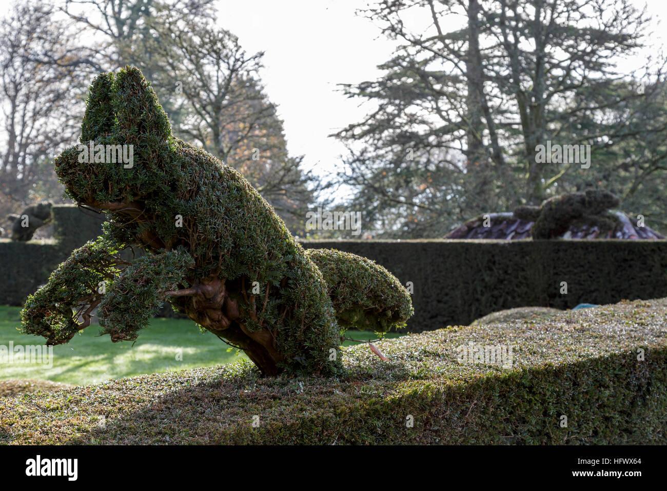 Running Fox Topiary In Yew Hedge Stock Photo Alamy