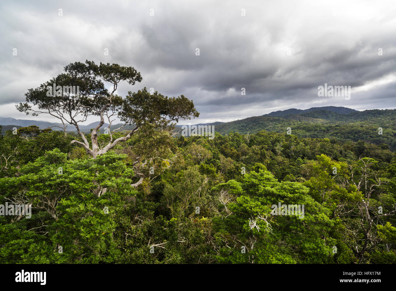 Above the rainforest canopy of the Macalister Range. Cairns, Queensland. As viewed from the Skyrail Cableway - Stock Image