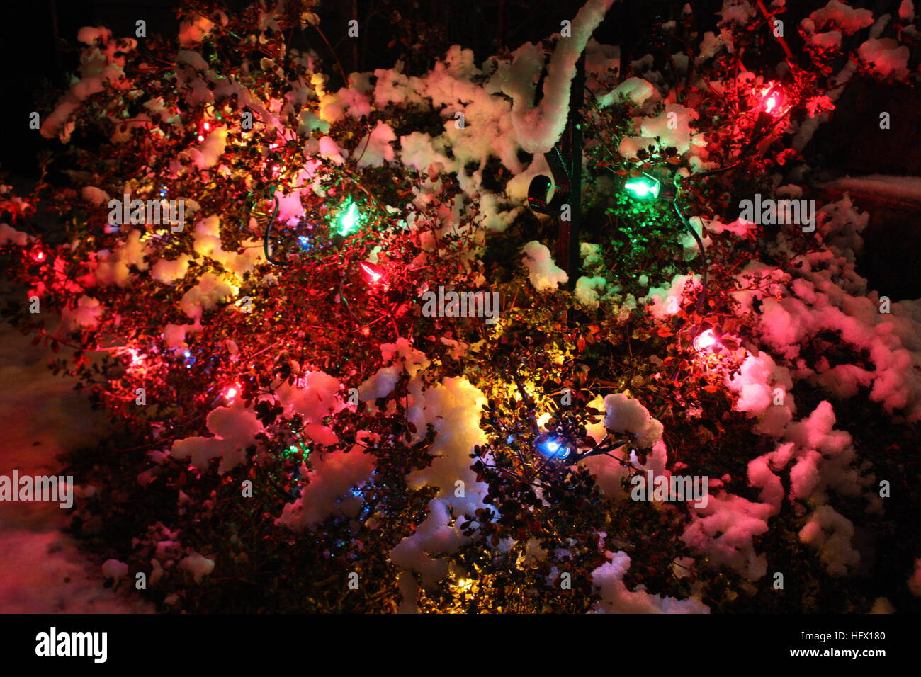 Vancouver Christmas Snow.Christmas Lights On A Bush In The Snow Vancouver British