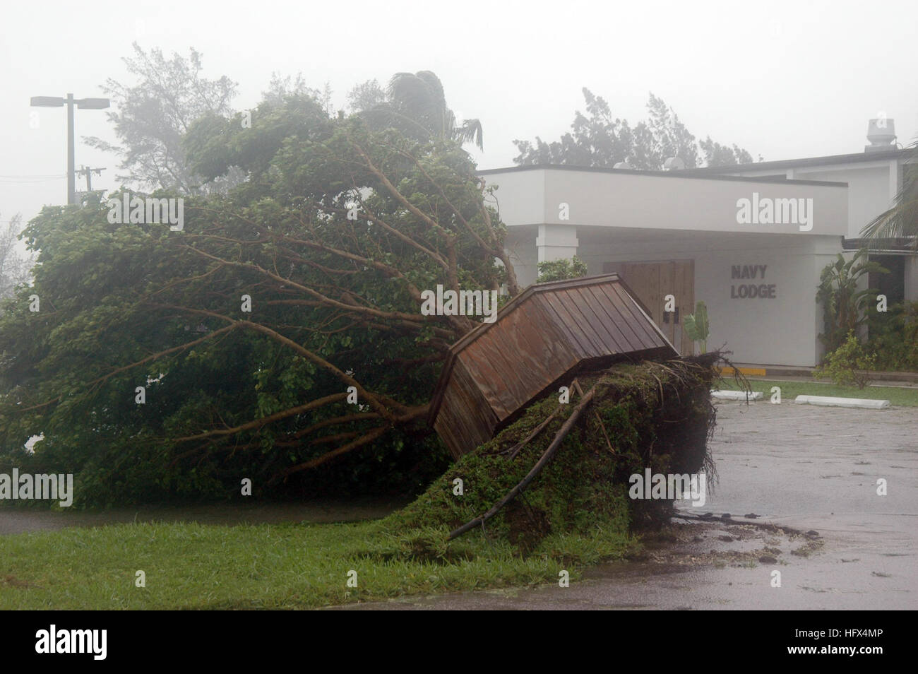 050709-N-0000B-008 Key West, Fla. (July 9, 2005) - A tree is uprooted outside the Naval Air Station (NAS) Key West - Stock Image