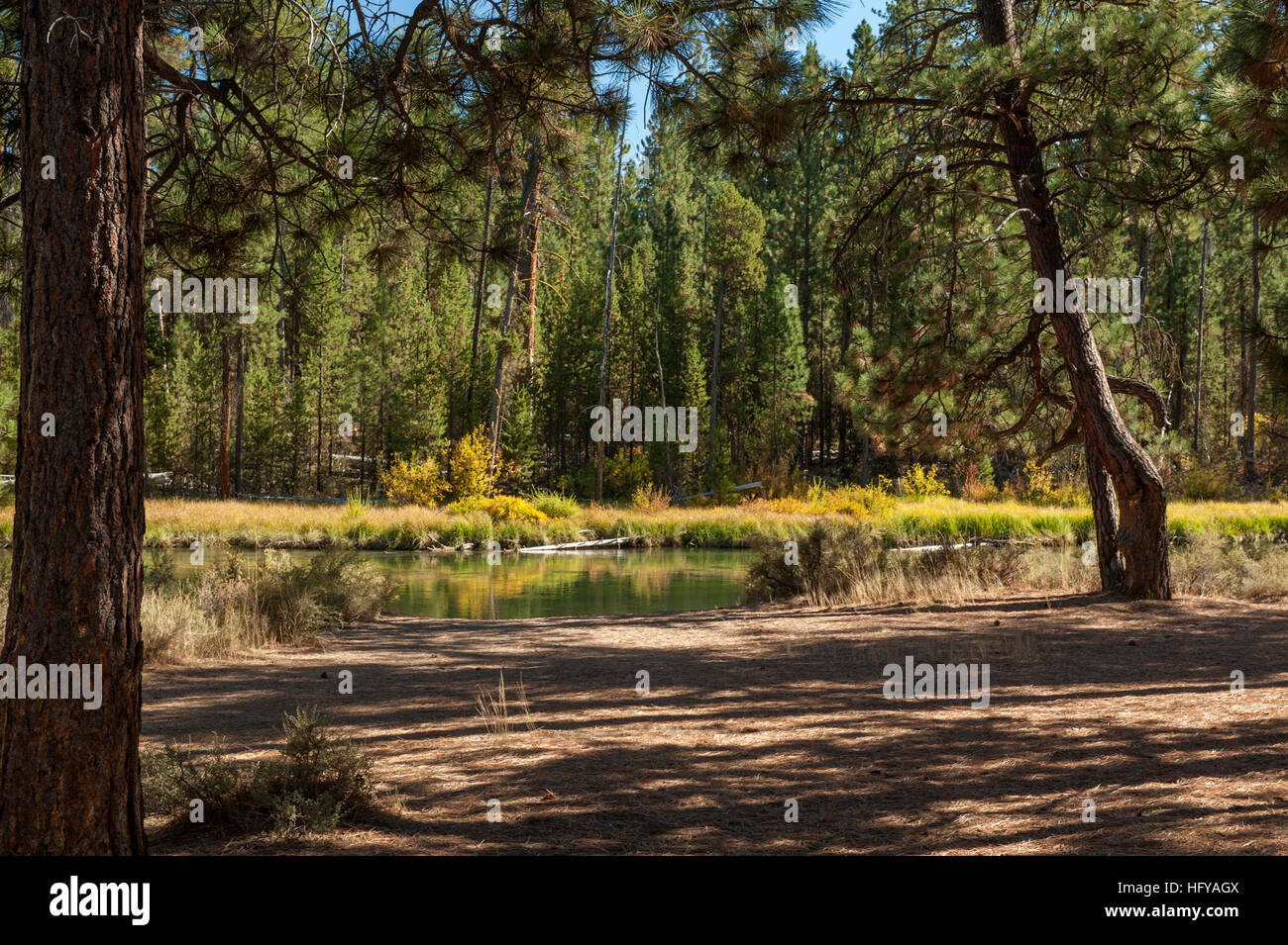 The view at one of the camp sites in Bull Bend Campground (USFS) near LaPine, Oregon.  The river is the Deschutes. - Stock Image