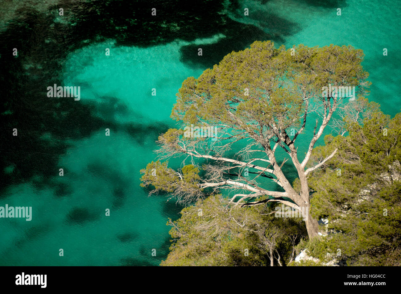Turquoise waters & Overhanging Pine Tree in the Calanque d'En Vau Inlet, Cove or Fjord in the Calanques - Stock Image