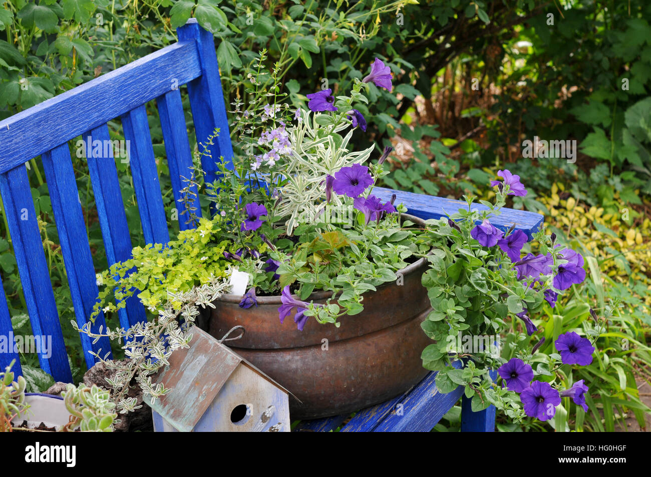 Blue garden bench with pot plants - Stock Image