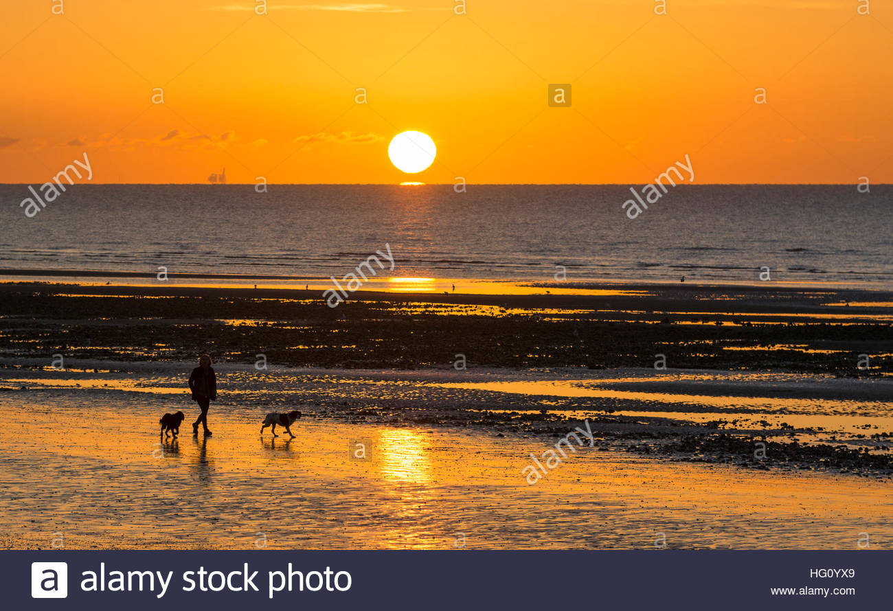 Walking dogs on the beach in freezing weather as the sun rises over the sea in the UK. - Stock Image