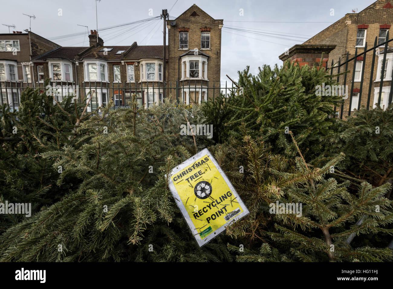 Christmas Tree Recycling Stock Photos & Christmas Tree
