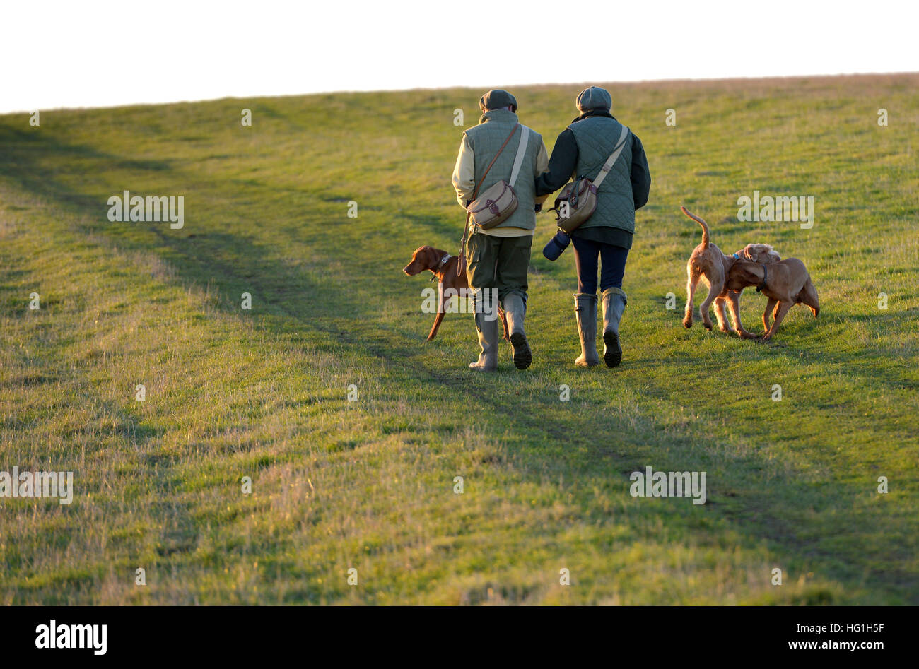 Country couple walking dogs on the South Downs Way - Stock Image