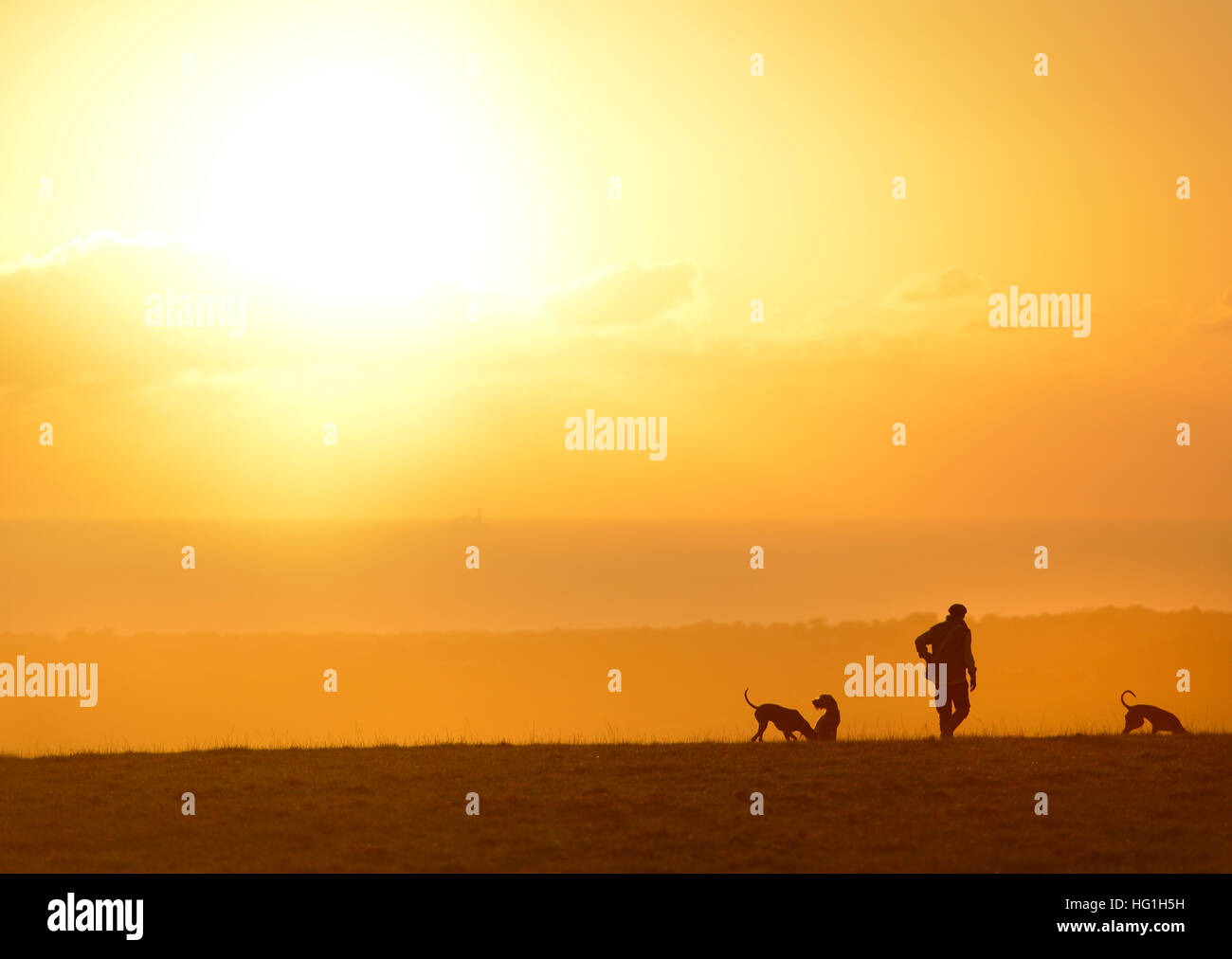 Country gent in tweed with three dogs. Sunset on the South Downs near Lewes - Stock Image