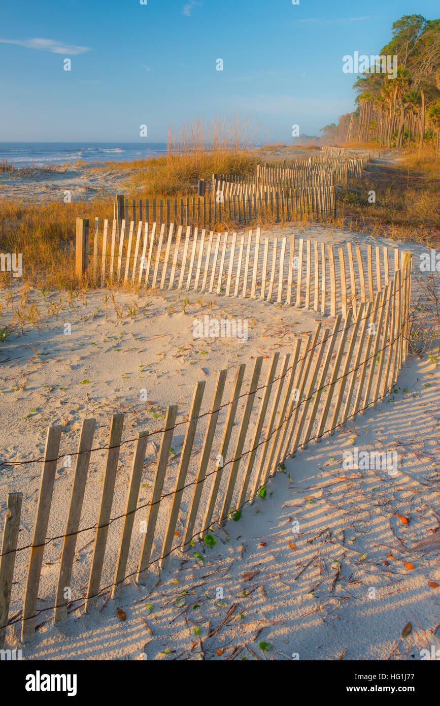 Coastal dunes, grasses and dune fence, Hunting Island State Park, Atlantic ocean, South Carolina USA - Stock Image