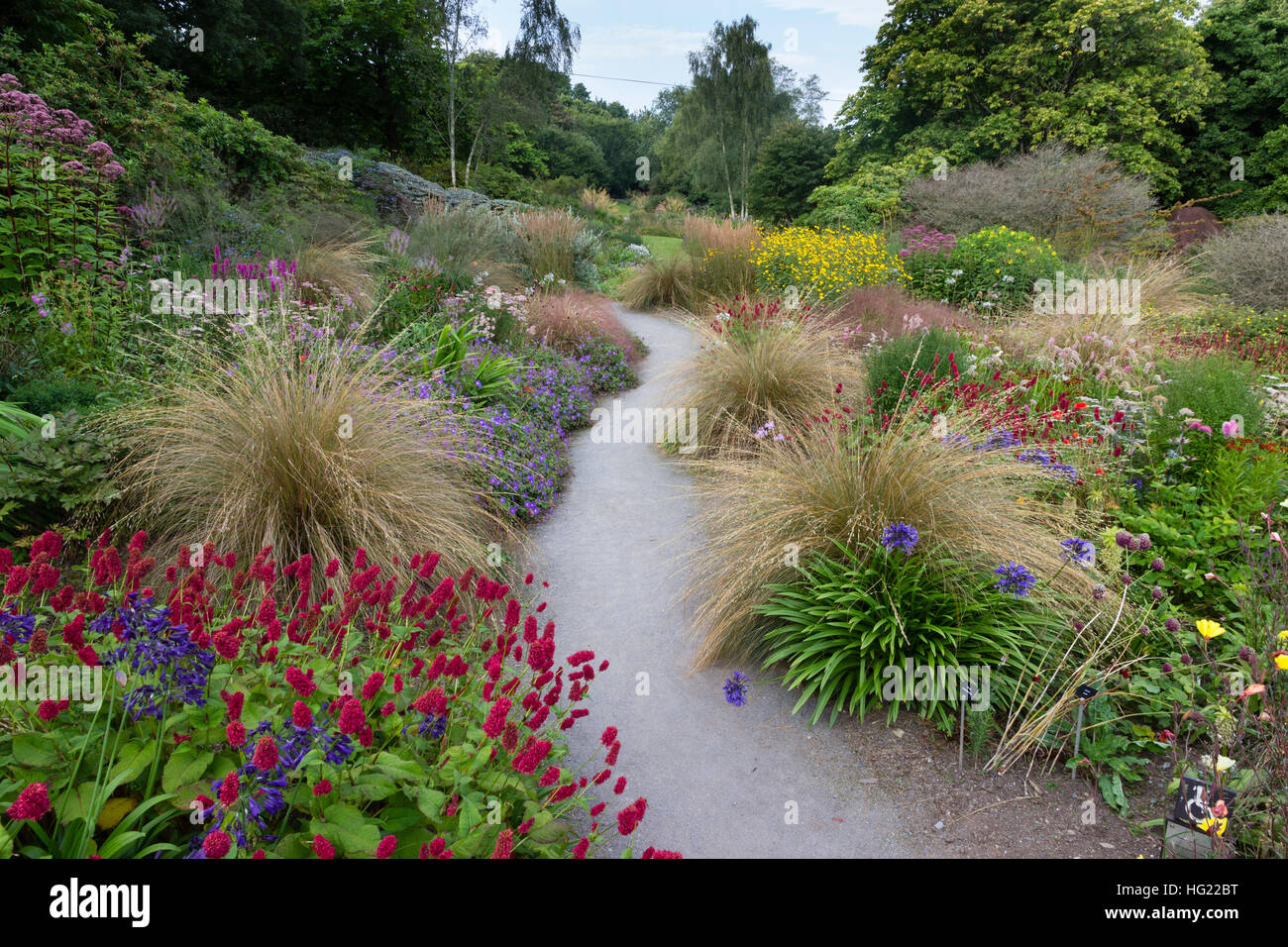View over the colourful perennial drift planting of the Summer Garden at the Garden House, Devon, UK - Stock Image