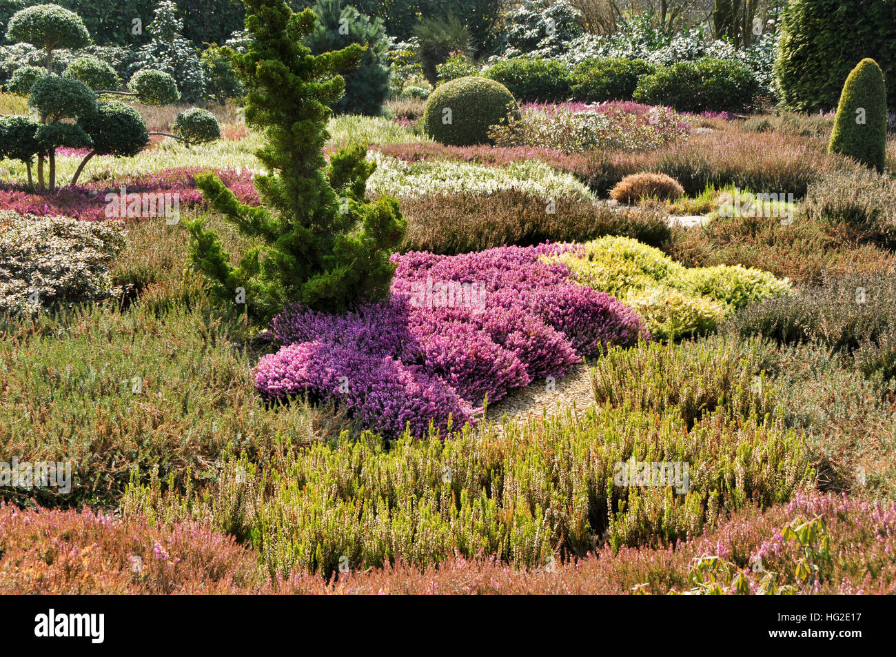 Heather garden with conifers in sun light Stock Photo