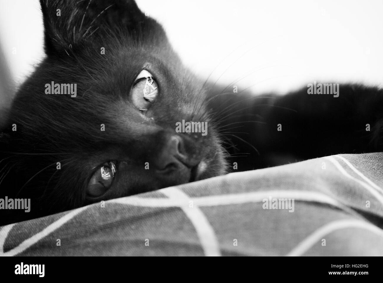 The melancholic cat! - Stock Image