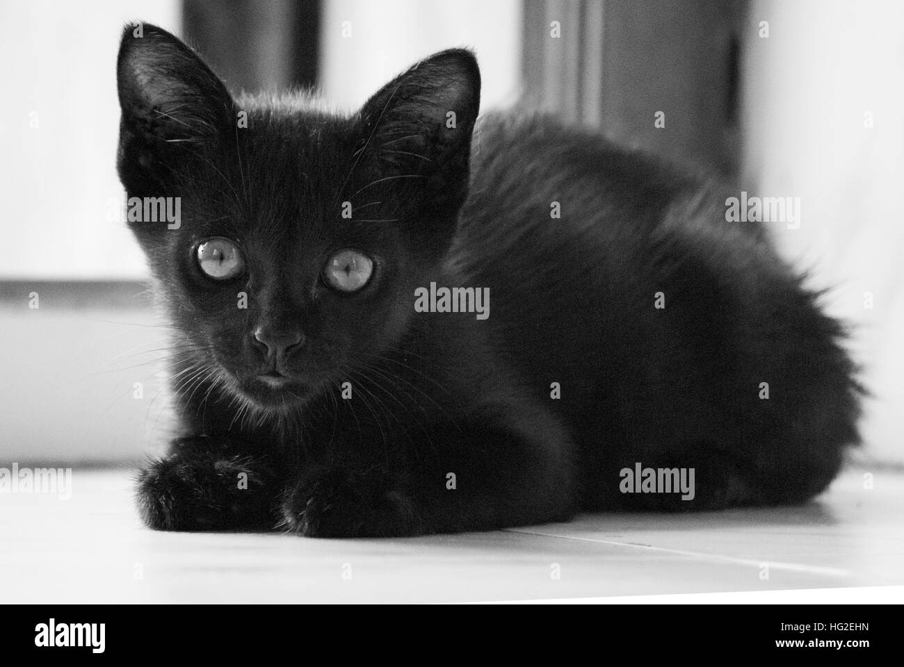 The Careful cat! - Stock Image