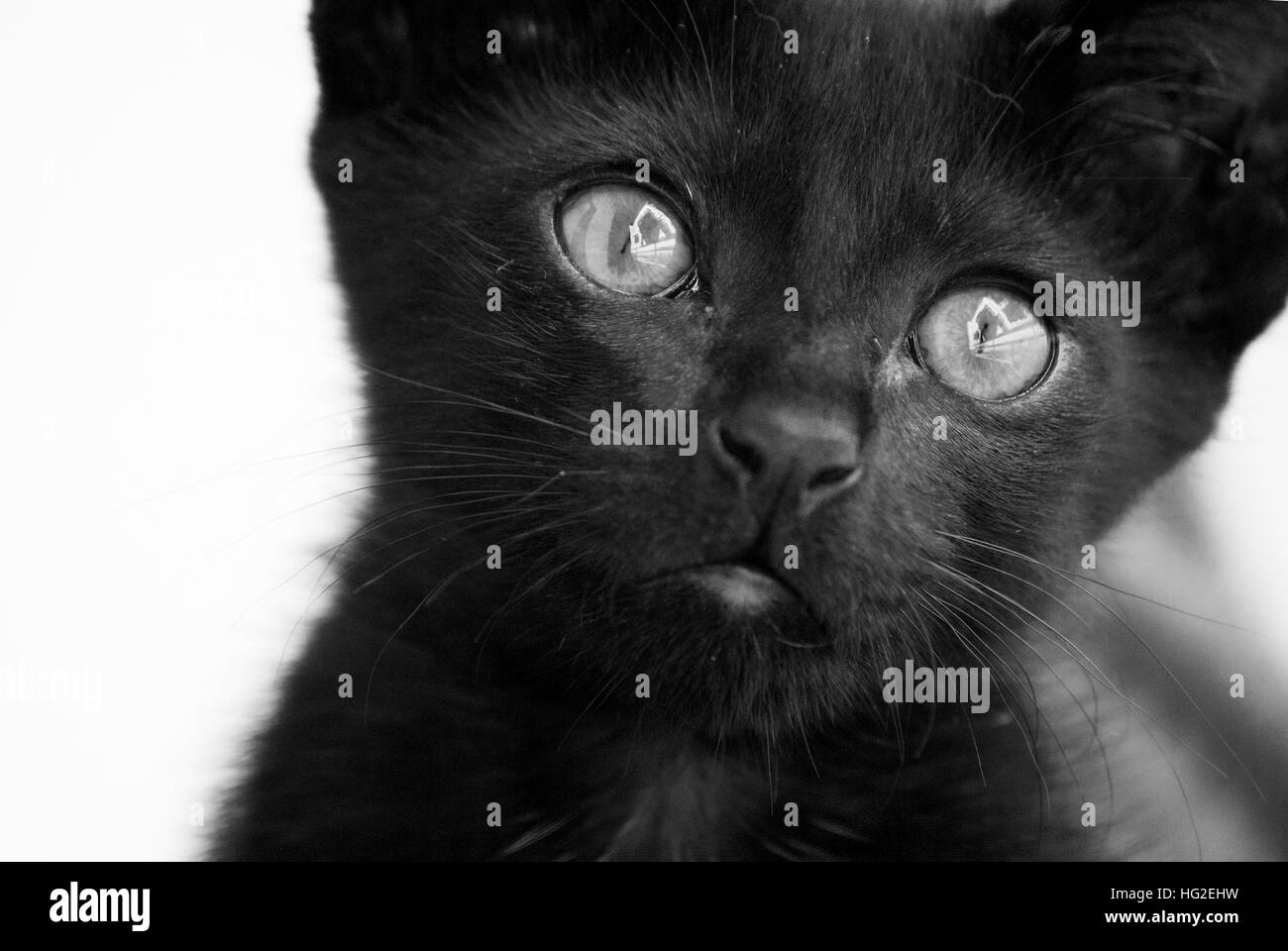 The sad Cat - Stock Image