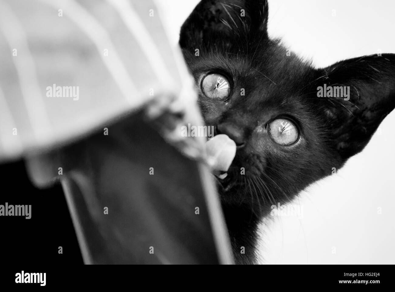 The Funny cat - Stock Image