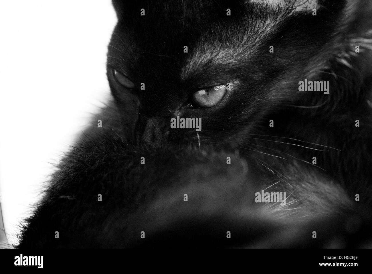 The Mysterious cat! - Stock Image